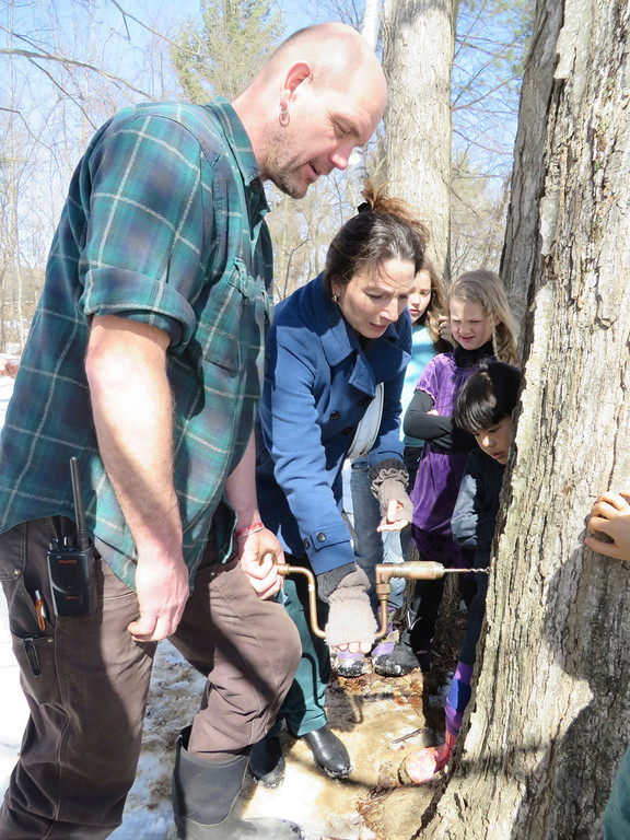 . Third-grade teacher Michelle Marx tries her hand at drilling into a sugar maple tree for tapping sap with the help of facilities manager Hartmuth Sommer at Great Barrington Rudolph Steiner School. Jenn Smith/ Berkshire Eagle Staff/ photos.berkshireeagle.com Tuesday, March, 11, 2014