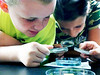 Thayne Carlo, 10, and Aileen Barry, 10, look to see if their zebra fish have hatched on Wednesday, July 24, 2013.