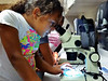 Yasmine Caesar, 10, examines her groups petri dish with a microscope during a weeklong class on the lifecycle of the zebra fish on July 23, 2013.