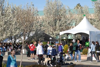 St. Patrick's Day Festival and Fun Run - 16 March 2008