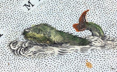 Dog-fish sea-monster