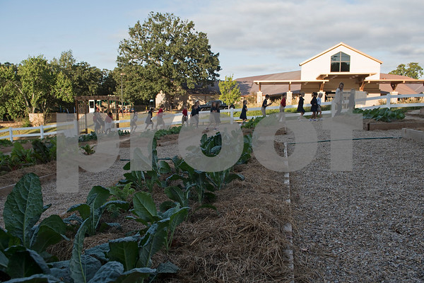 All Saints Episcopal School students walk past rows of vegetables they planted as they arrive for the dedication ceremony for the school's new learning farm Tuesday Oct. 10, 2017 in Tyler, Texas. All Saints Episcopal School has the largest school learning farm in the state of Texas. It is located on their campus and allows students to learn about farming from planting and harvesting plants to caring for egg-laying hens.  (Sarah A. Miller/Tyler Morning Telegraph)