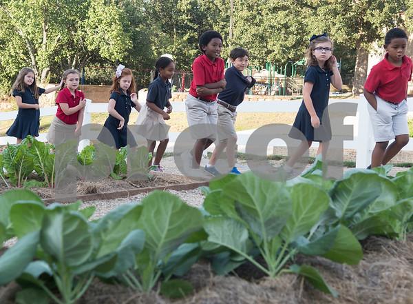All Saints School Learning Farm