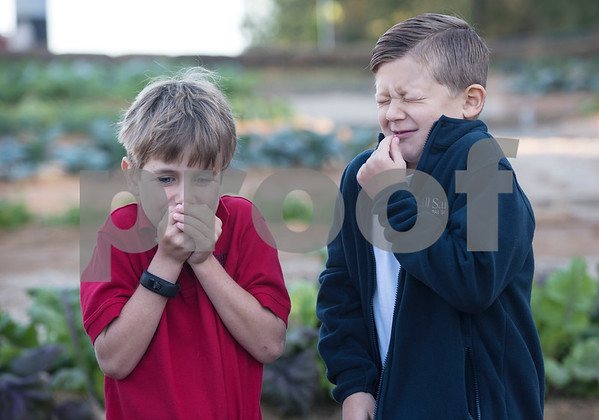 All Saints Episcopal School first graders Nash Jones, 7, and Noah Chandler, 7, taste sour apple lettuce during harvest day at the school's new farming program Tuesday Oct. 17, 2017. The private school in Tyler has started a Lower School Learning Farm complete with several varieties of salad green and soup green as well as egg laying hens.  (Sarah A. Miller/Tyler Morning Telegraph)