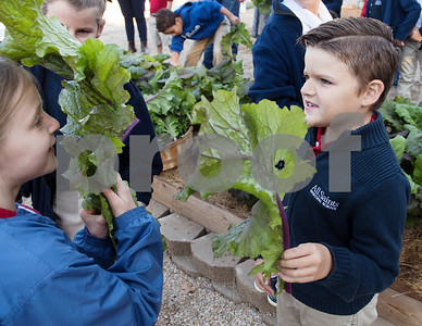 All Saints Episcopal School and first graders Allison Jones, 7, and Kingston Sinclair, 7, hide behind leaves of book choy during harvest day at the school's new farming program Tuesday Oct. 17, 2017. The private school in Tyler has started a Lower School Learning Farm complete with several varieties of salad green and soup green as well as egg laying hens.  (Sarah A. Miller/Tyler Morning Telegraph)