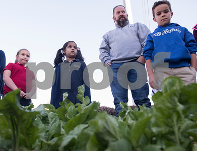 All Saints Episcopal School third and first graders stand in front of rows of arugula with chef Michael Brady as they receive instructions for harvest day at the school's new farming program Tuesday Oct. 17, 2017. The private school in Tyler has started a Lower School Learning Farm complete with several varieties of salad green and soup green as well as egg laying hens.  (Sarah A. Miller/Tyler Morning Telegraph)