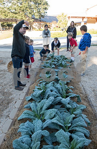 All Saints Episcopal School third and first graders learn about dinosaur kale from Mike Loggins of Micro Family Farms during the school's new farming program Tuesday Oct. 17, 2017. The private school in Tyler has started a Lower School Learning Farm complete with several varieties of salad green and soup green as well as egg laying hens.  (Sarah A. Miller/Tyler Morning Telegraph)