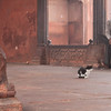 Stray cat in the Jama Masjid Mosque, Dehli.