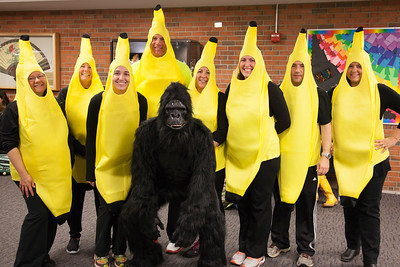 2016-2017 Gorilla and his Bananas!