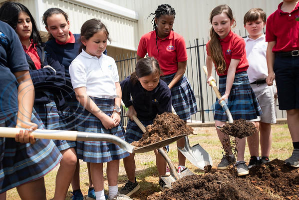 St. Gregory Cathedral School fifth graders work together to plant a tree in their playground in Tyler on Tuesday April 16, 2019. The fifth grade classes planted and dedicated two Live Oak trees to their school.   (Sarah A. Miller/Tyler Morning Telegraph)