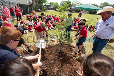 Jeff Tuley of the Tyler Trees Committee, right,  assists St. Gregory students work to plant a tree at the St. Gregory Cathedral School playground in Tyler on Tuesday April 16, 2019. The fifth grade classes planted and dedicated two Live Oak trees to their school.   (Sarah A. Miller/Tyler Morning Telegraph)
