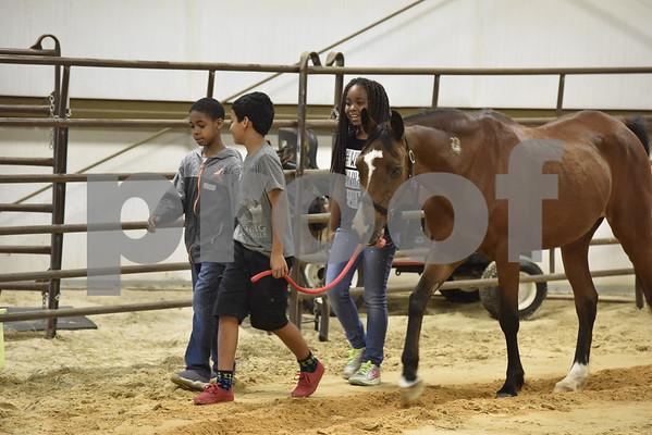 TISD Equine