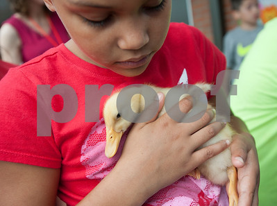 Mineola Elementary School third grader Desarae Bamberg, 8, holds a duckling during the Science Extravaganza Friday May 15, 2015. Mineola High School students ran the event which had many different hands-on science experiment and demonstration booths for second through fifth graders to learn about. The projects included slingshots, microscopes, lasers, giant bubbles, chemical reactions and more.   (photo by Sarah A. Miller/Tyler Morning Telegraph)