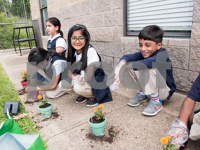 Third graders plant flowers for their mothers for Mother's Day during class at Islamic Faith Academy in Tyler Tuesday May 9, 2017. Mother's Day in Sunday May 14.   (Sarah A. Miller/Tyler Morning Telegraph)
