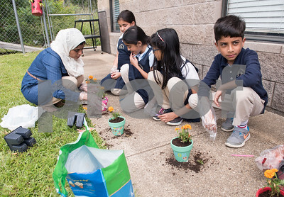 Teacher Maria Qureshi assists her third graders in potting flowers for their mothers for Mother's Day during class at Islamic Faith Academy in Tyler Tuesday May 9, 2017. Mother's Day in Sunday May 14.   (Sarah A. Miller/Tyler Morning Telegraph)