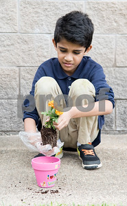 Third grader Owaan Syed puts his marigold flower into a pot her decorated for his mother for Mother's Day during class at Islamic Faith Academy in Tyler Tuesday May 9, 2017. Mother's Day in Sunday May 14.   (Sarah A. Miller/Tyler Morning Telegraph)