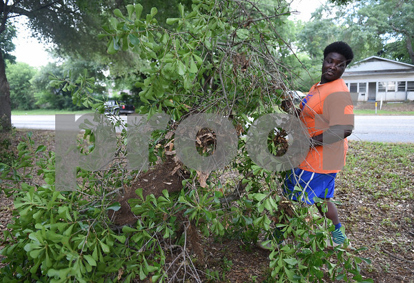 Kingdom Life Academy student Jaquan McKenzie, 17, helps remove large tree branches from the yard of a home on Martin  Luther King Jr. Blvd. in Tyler Saturday morning June 11, 2016. The school has partnered with the City of Tyler to assist in yard work those who cannot do it themselves such as the elderly and disabled.   (Sarah A. Miller/Tyler Morning Telegraph)