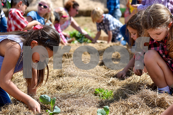 Ella Wang, 7, left, plants a plant in the garden with her classmates at the Learning Farm at All Saints Episcopal School in Tyler, Texas, on Wednesday, Sept. 20, 2017. The lower school is participating in the upkeep with the garden as part of their science classes. (Chelsea Purgahn/Tyler Morning Telegraph)