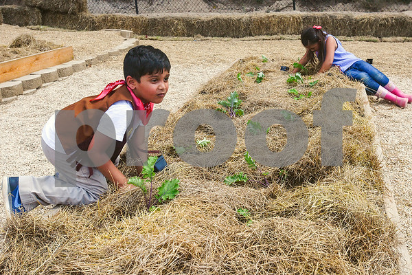 Aarav, 6, and Ella Wang, 7, plant plants at the Learning Farm at All Saints Episcopal School in Tyler, Texas, on Wednesday, Sept. 20, 2017. The lower school is participating in the upkeep with the garden as part of their science classes. (Chelsea Purgahn/Tyler Morning Telegraph)