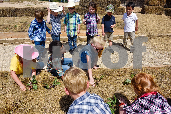 Students plant plants at the Learning Farm at All Saints Episcopal School in Tyler, Texas, on Wednesday, Sept. 20, 2017. The lower school is participating in the upkeep with the garden as part of their science classes. (Chelsea Purgahn/Tyler Morning Telegraph)