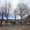 """Six trees and walkway behind Billerica Memorial High School, which appears to be trees (formerly with plaques) dedicated to six students who died in accidents in the 1990s. Trees range from 9""""-14"""" diameter trunks and appear to be Norway maples. (SUN/Julia Malakie)"""