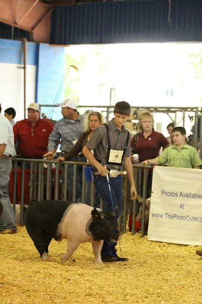 Livestock Shows