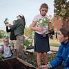 Canterbury Gardens 10-23-18