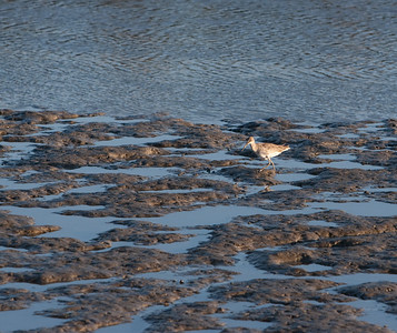 The long-legged shore birds seemed particularly at home here.
