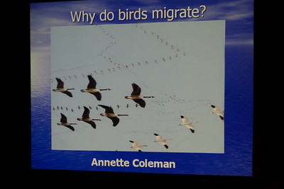 There was an interesting discussion of migration behavior, and not just for birds.
