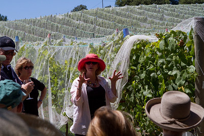 Judy Schultze showed us the three-tier wire system and explained how the vines are trimmed and directed along the wires.