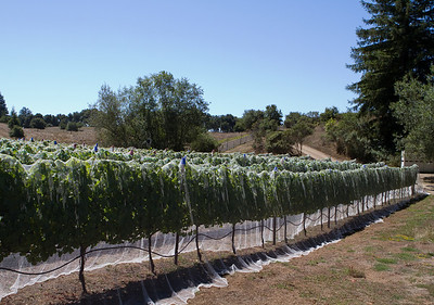 It was interesting how the vines were covered.