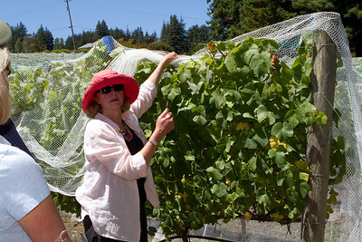 Judy Schultze uncovered some of the vines so we could see how they were prepared for the next stage of growing.