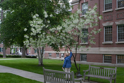 Day 1 - Janet spots a beautiful tree in blossom