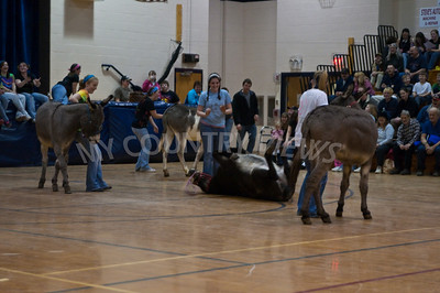 2009 Donkey basketball-42