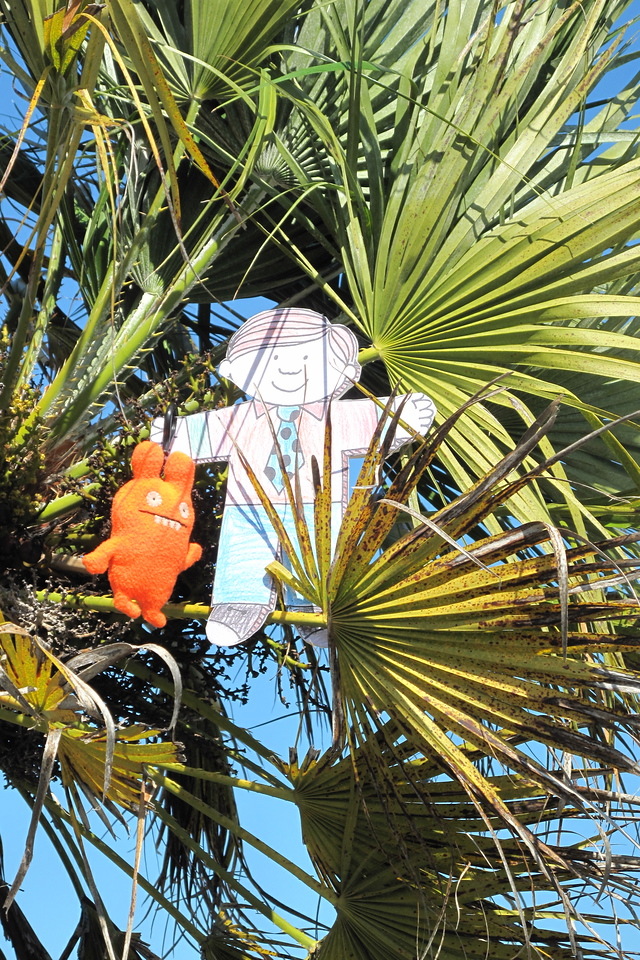 Flat Stanley climbs a palm tree