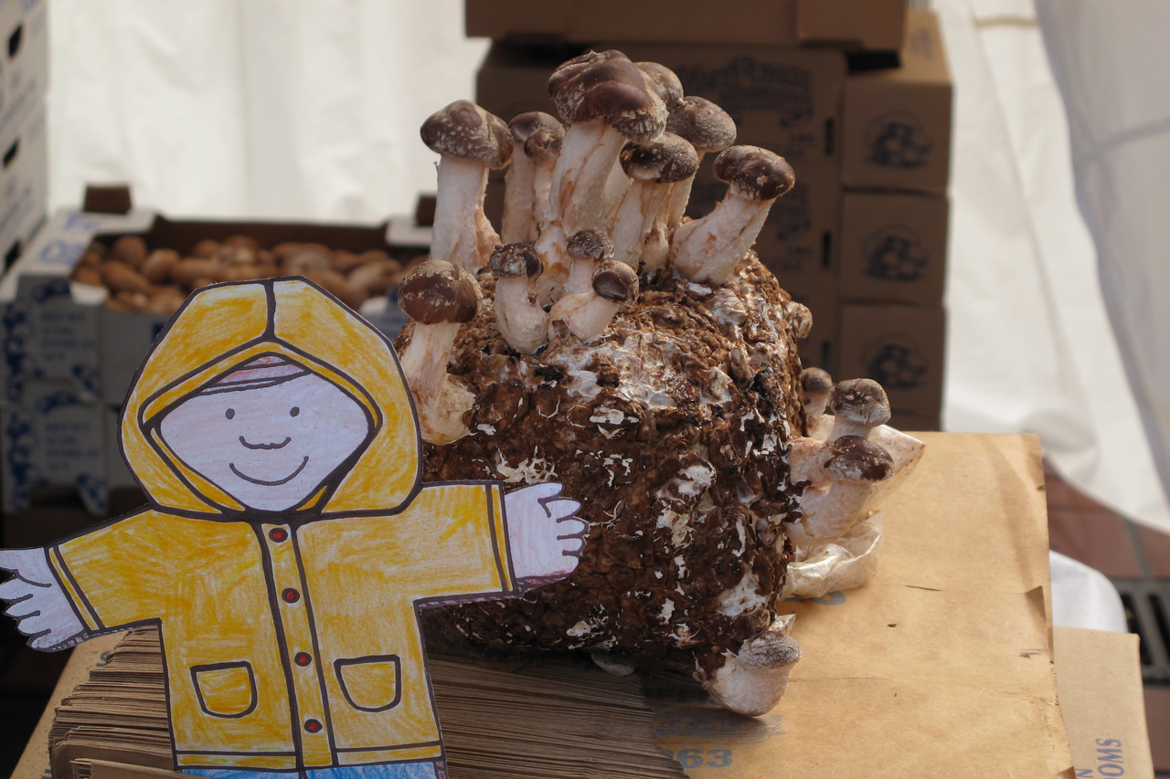 Flat Stanley shopping for mushrooms at the Civic Center Farmers Market