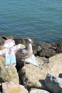 Flat Stanley makes friends with a seagull