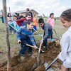 Students take part in planting a tree during the Arbor Day tree celebrating at Frances Drake Elementary School on Friday morning. SENTINEL & ENTERPRISE / Ashley Green
