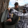 Greater Lowell Tech students tap sugar maples to collect sap to make maple syrup, as part of their environmental science class. Alex Rodriguez, 17, a senior from Lowell, catches a drop of sap. (SUN/Julia Malakie) [Student at right ok for photo but not name.]