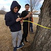 Greater Lowell Tech students tap sugar maples to collect sap to make maple syrup, as part of their environmental science class. Seniors Eh Moo, 17, left, and Cristian Colon, 18, both of Lowell, use a diameter tape to measure the diameter at breast height (determined by height of wood frame) of a sugar maple they're tapping. (SUN/Julia Malakie)