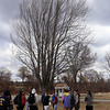 Greater Lowell Tech students tap sugar maples to collect sap to make maple syrup, as part of their environmental science class. Class gathers near one of the sugar maples. (SUN/Julia Malakie)
