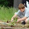 John R. Briggs fifth grader R.J. Dimacale, 11, works to save a plants in the schools garden on Wednesday morning in Ashburnham. SENTINEL & ENTERPRISE/JOHN LOVE