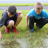 John R. Briggs fifth graders Tim Ovaska, 11, and R. J. O'Brian, 11, look for some tadpoles in the stream after working in the schools garden on Wednesday morning in Ashburnham. SENTINEL & ENTERPRISE/JOHN LOVE