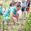 John R. Briggs fifth grader Kinsale Carney, 11, plants some flowers in the schools garden on Wednesday morning in Ashburnham. SENTINEL & ENTERPRISE/JOHN LOVE