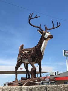 Local Artists of Scrap Metal Iron Sculptures - Brett and Tammy Prang made this large iconic stag at our first pit stop - the Sinclaire Gas Station