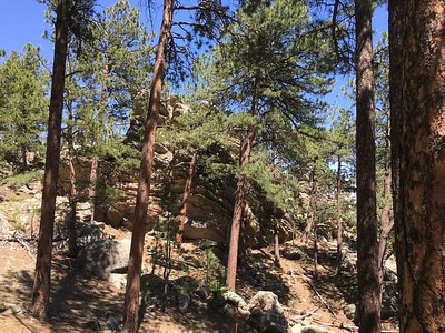 Beautiful rock outcrops on the side of Mount Rushmore - the air was rich with evergreen aromas