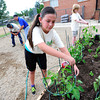 Kylie Powers works shoring up tomatoes plants as part of a group of 4th graders Kohl Elementary School in Broomfield planting a garden behind the school as part of Disney's Planet Challenge, an environmental and science competition for grades 3-8. May 22, 2012<br /> Photo by Paul Aiken