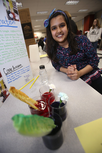 McCarthy Middle School's annual Science & Engineering Fair. Fifth grader Vaanya Sangwan, 10, of Chelmsford with her project, Capillary Action in Plants, and lettuce and flowers that absorbed food coloring. (SUN Julia Malakie)