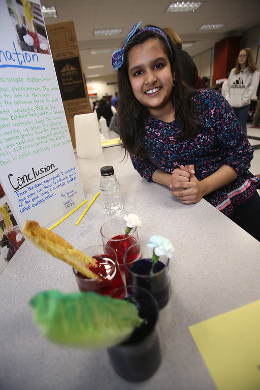 . McCarthy Middle School\'s annual Science & Engineering Fair. Fifth grader Vaanya Sangwan, 10, of Chelmsford with her project, Capillary Action in Plants, and lettuce and flowers that absorbed food coloring. (SUN Julia Malakie)
