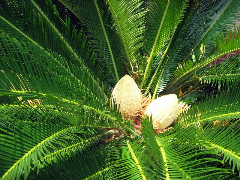 Palm Buds <br /> Under portrait mode, forgot about foliage mode!